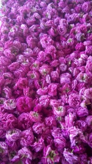 Petale proaspete de trandafir Rosa Damascena
